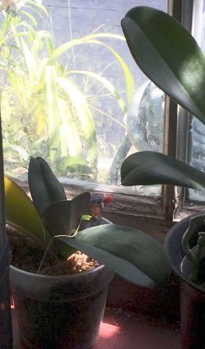 Harold Finch Bird Zebra Finch Enjoying Life Showcase: February Orchid And Bird Animals