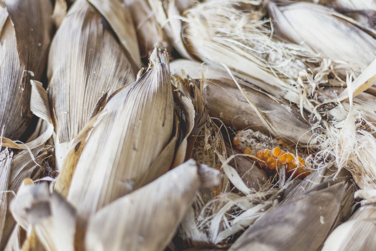 Backgrounds Close-up Corn Dry Corn Dry Corn Plants Food And Drink Full Frame Nature Outdoors