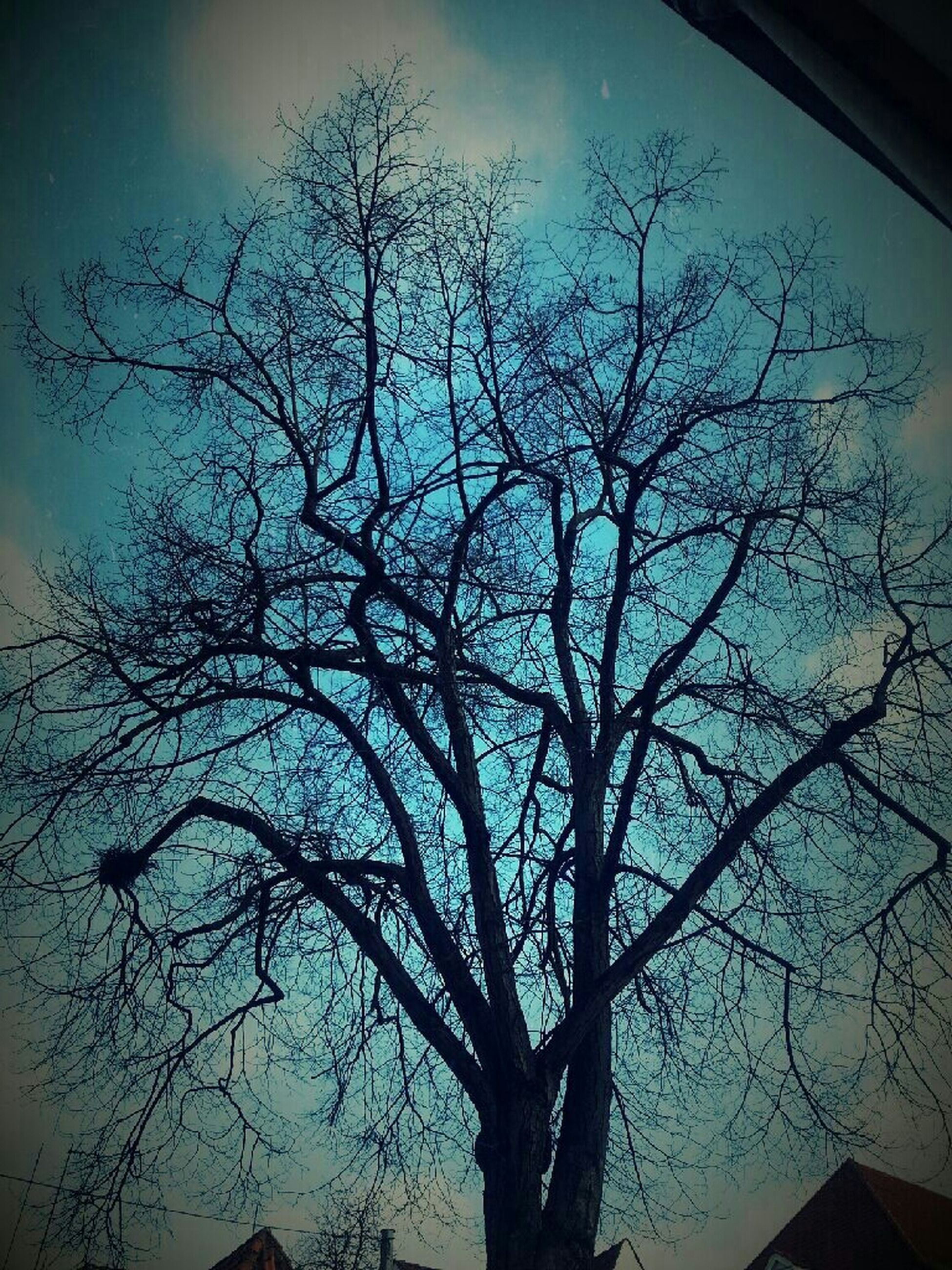 bare tree, branch, tree, low angle view, silhouette, sky, tranquility, nature, dusk, built structure, beauty in nature, scenics, outdoors, auto post production filter, no people, tree trunk, tranquil scene, cloud - sky, architecture, building exterior