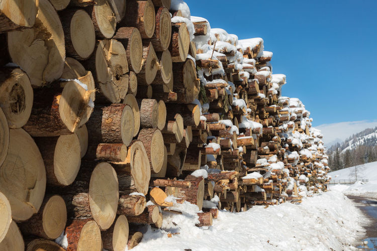 Woodpile with snow- cross section of tree trunks background.
