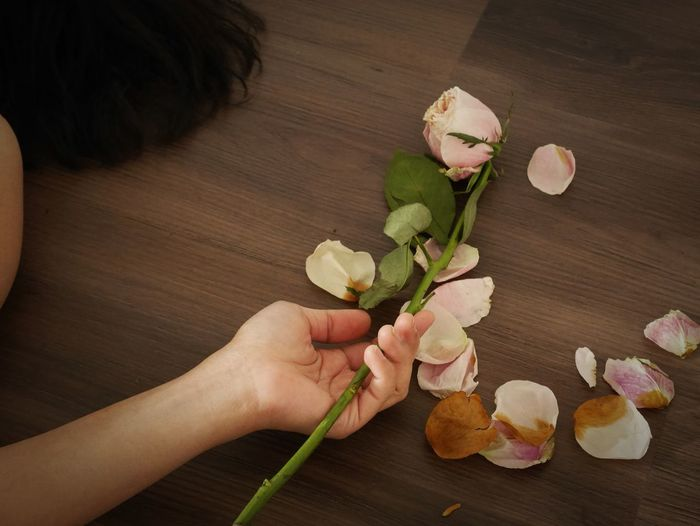 Cropped image of hand holding rose on table