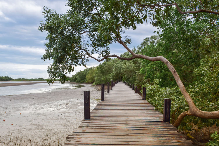 Empty wooden pier amidst trees against sky