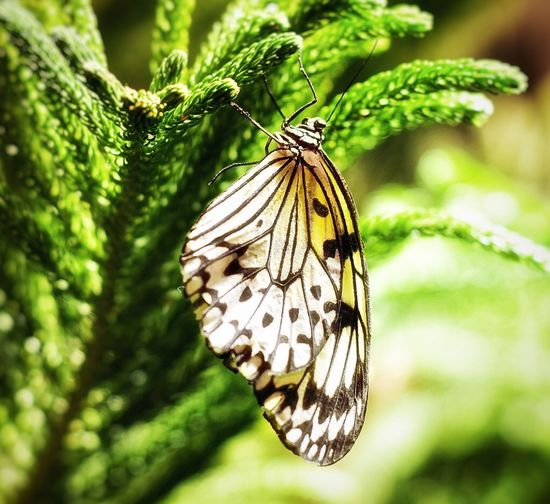 One Animal Insect Animal Themes Animals In The Wild No People Animal Wildlife Close-up Butterfly Nature