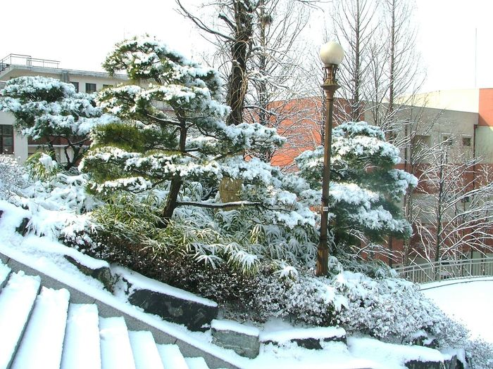 Winter South