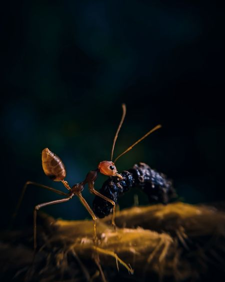 Nature Macro Beauty Macro Photography Rainy Season Tiny Planet Earth Close-up Ant