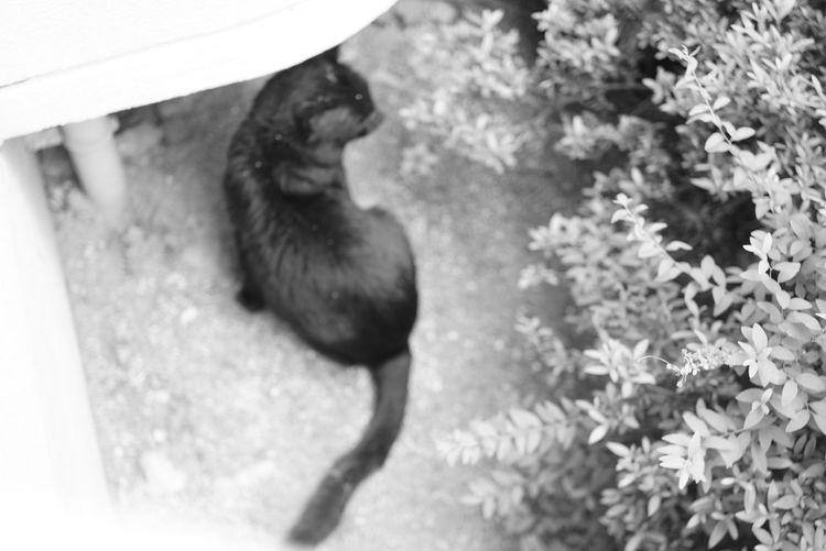 Cat Black And White BLackCat Animal Themes Close-up