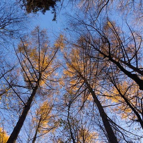 Autumn in the forest Autumn Herbst Treetops Baumwipfel wipfel lärchen larch sky himmel skyblue himmelblau branches äste twigs zweige