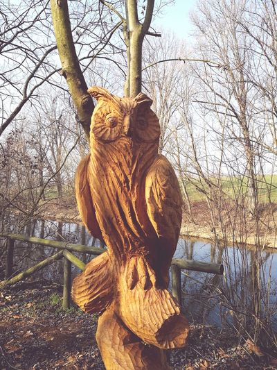 Animal Themes Outdoors Nature Sculpture Gufo