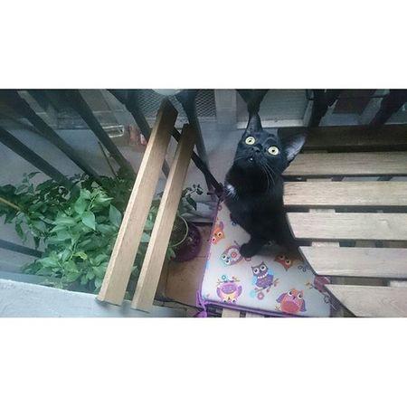 Isis Excellentcats Bestmeow Bestcats_oftheworld Meow_beauties Meowbox Meow Catoftheday Catsofinstagram Topcatphoto Kittensofinstagram Kitten All_shots Like4like Picoftheday Photooftheday Catlovers