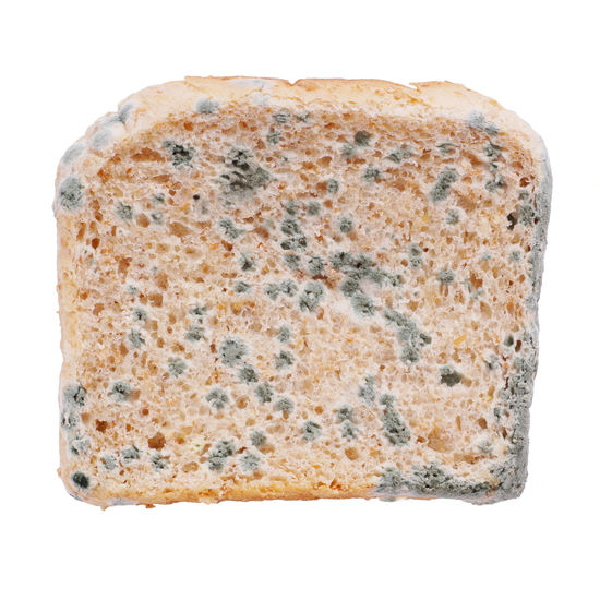 Mold Toast Bread Close-up Food Moldy Moldy Slice Of Bread Mould No People SLICE Studio Shot White Background