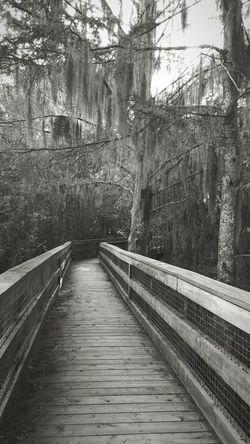 Black Bayou observation deck Swamp Swamplife Spanish Moss Louisiana Louisiana Swamp Louisianaphotography