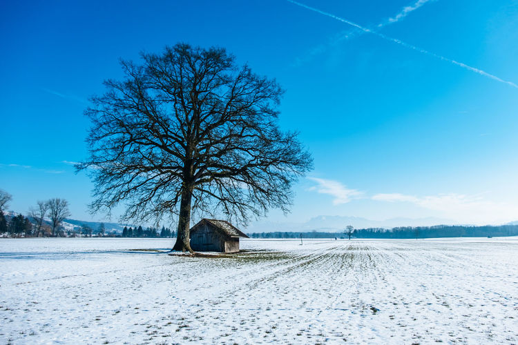 Tree By House On Snow Covered Landscape Against Sky