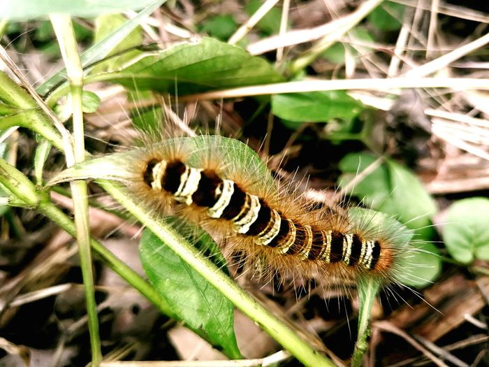 Insect Tail