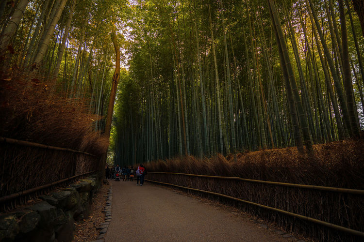 People on footpath amidst bamboo grove