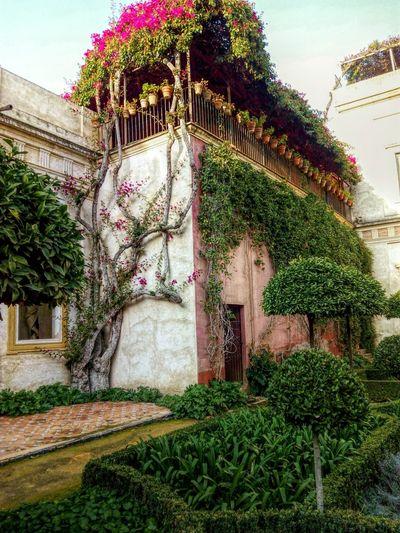 House Palace Spain♥ Sevilla Palacio Eyemphotography Photooftheday Green Nature Beatifull España Showcase: February EyeEm Naturelovers Love South Balcony Roses🌹 Plants Casa Beautifull Peacefull Life Andalusian Tree