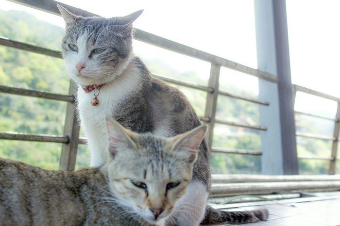 貓咪 Kitten Take A Trip Cats
