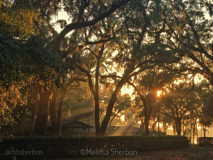 Tree Sunset Nature Tranquil Scene After The Rain Natural Light Florida Eye4photography  Hammock Lakeshore