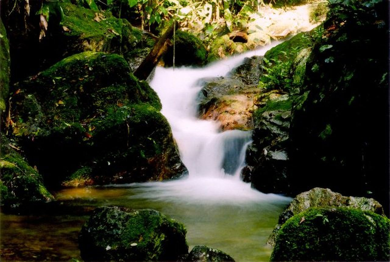 waterfall, scenics, water, motion, rock - object, beauty in nature, river, moss, forest, outdoors, nature, no people, freshness, day