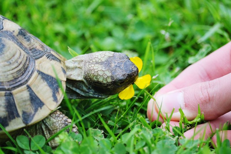 Turtle Animals Pets Tortoise picture taken with Canon EOS 7D Mark ii EyeEm Selects