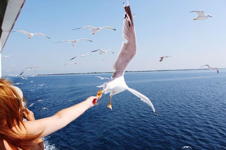 EyeEmNewHere feeding seagulls