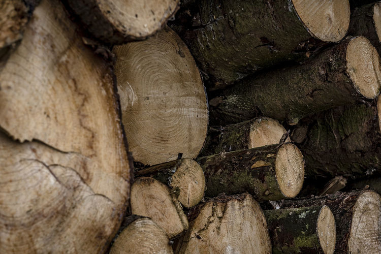 Backgrounds Close-up Day Deforestation Full Frame Log Lumber Industry Nature No People Outdoors Stack Textured  Timber Wood - Material Woodpile