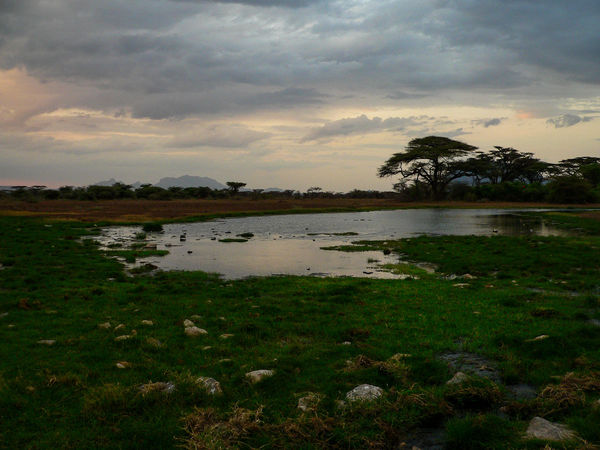 Shaba National Reserve in Northern Kenya Kenya National Park The Week On EyeEm Africa Beauty In Nature Cloud - Sky Day Grass Growth Lake Landscape Nature No People Outdoors Plant Scenics Sky Sunset Tranquil Scene Tranquility Travel Destinations Tree Water