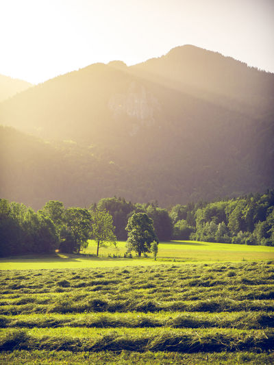 mowed grass on a field with mountains of the bavarian alps in the background with the peack of Wallberg mountain. Scharling, Bavaria, Germany, June 2019 Germany Tergernsee Wallberg Scenics - Nature Tranquil Scene Beauty In Nature Tranquility Environment Landscape Mountain Sky Plant Non-urban Scene Nature No People Land Grass Sunlight Outdoors Rolling Landscape Grassland Mowing Drying Grass Agriculture Agricultural Land Alps Bavarian Alps