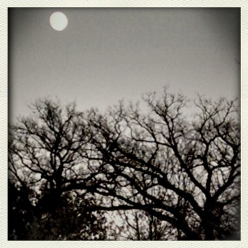 The Moon Sky Collection Nature_collection Landscape_Collection