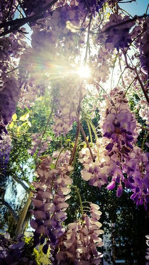 Tree Flower Water Branch Sunlight Sky Plant Plant Life Delicate In Bloom Botany Blooming Relaxing Moments Petal Flower Head Beautiful Softness Colored Relaxed Moments Blossom