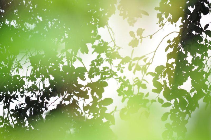 Tropicaldepression Hazy  Summer OBX Blurry On Purpose Leaves