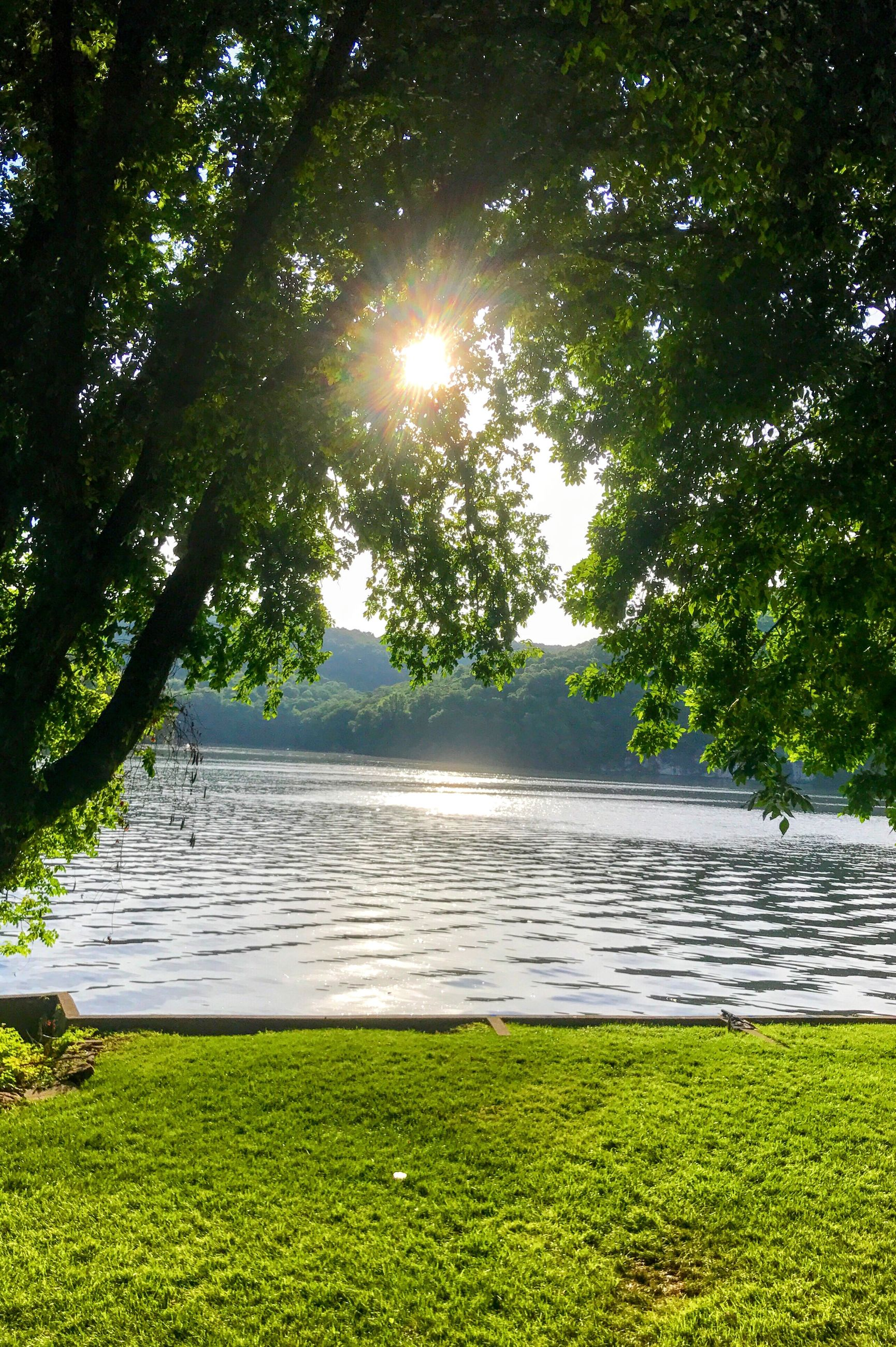 sun, nature, sunbeam, water, tree, lens flare, sunlight, tranquility, green, grass, beauty in nature, scenics, growth, green color, outdoors, no people, day, sea, sky