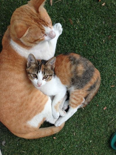 High angle view of cats lying on grass