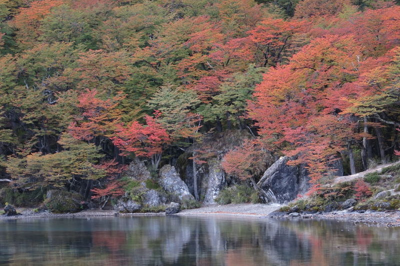 Water Tree Beauty In Nature Autumn Plant Lake Waterfront Scenics - Nature Forest Change Nature Land No People Reflection Day Growth Tranquility Tranquil Scene Environment Outdoors Flowing Water