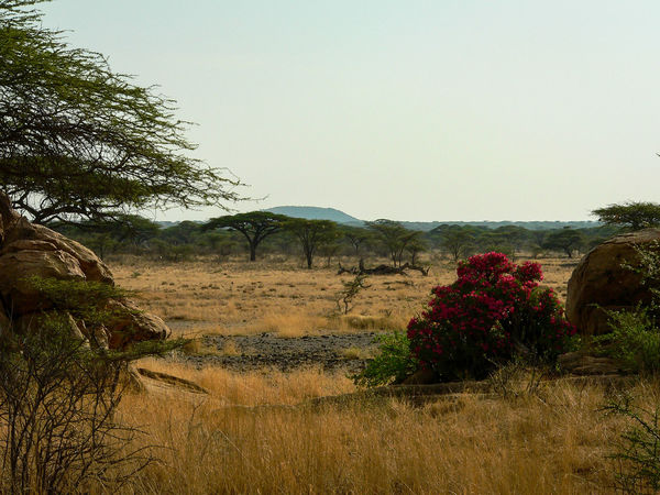 Shaba National Reserve in Northern Kenya Kenya National Park The Week On EyeEm Africa Beauty In Nature Clear Sky Day Field Flower Grass Growth Landscape Nature No People Outdoors Plant Scenics Sky Tranquil Scene Tranquility Travel Destinations Tree