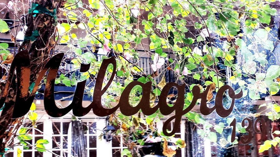 Milagro Words Miracles Font Lettering Art Building Window Word Basic