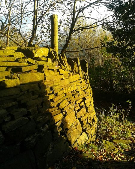 Drystonewalls Beauty In Nature Autumnbeauty Sunset Sunlight Tranquil Scene Autumnleaves Autumnbeauty Autumn Leaves Yellow Nature Pathways Scenics Cloud - Sky Beauty In Nature No People Shadow Leaves