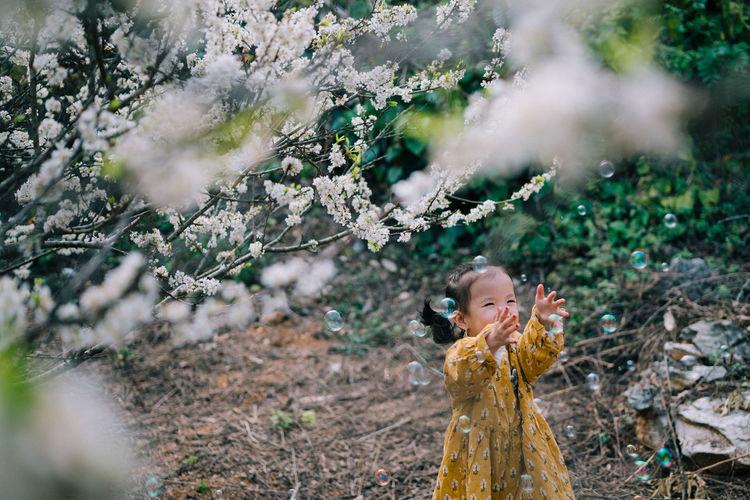 Full length of cute girl standing on plum blossoms garden