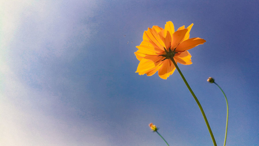 ..flower.. Clear Sky Beauty In Nature