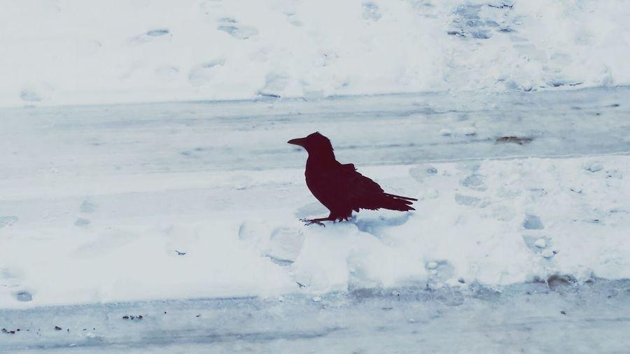 EyeEm Birds At A Truckstop