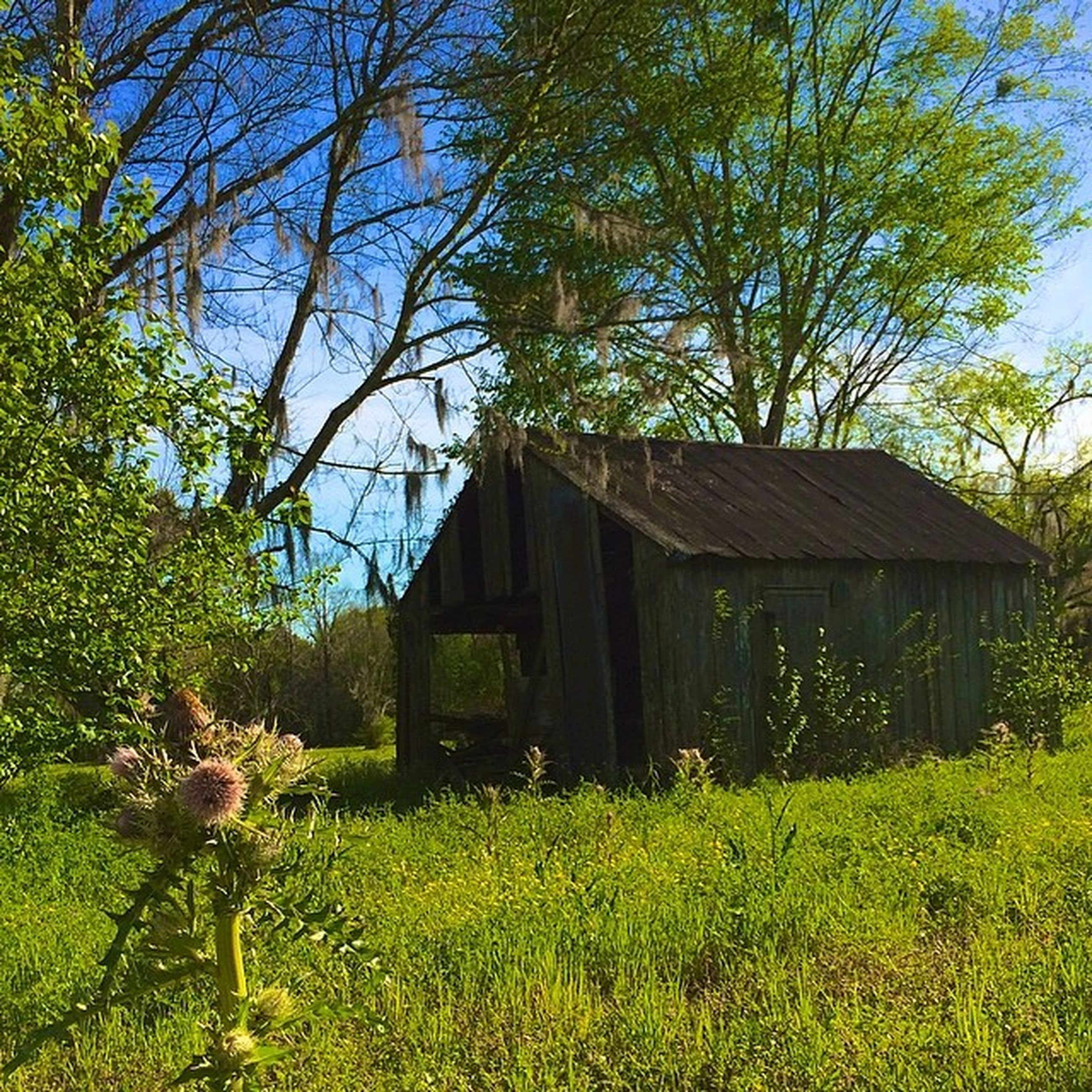built structure, building exterior, architecture, house, grass, tree, field, growth, plant, residential structure, sky, grassy, green color, nature, barn, day, rural scene, tranquility, wood - material, cottage