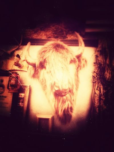 Grab that bull by the horns.