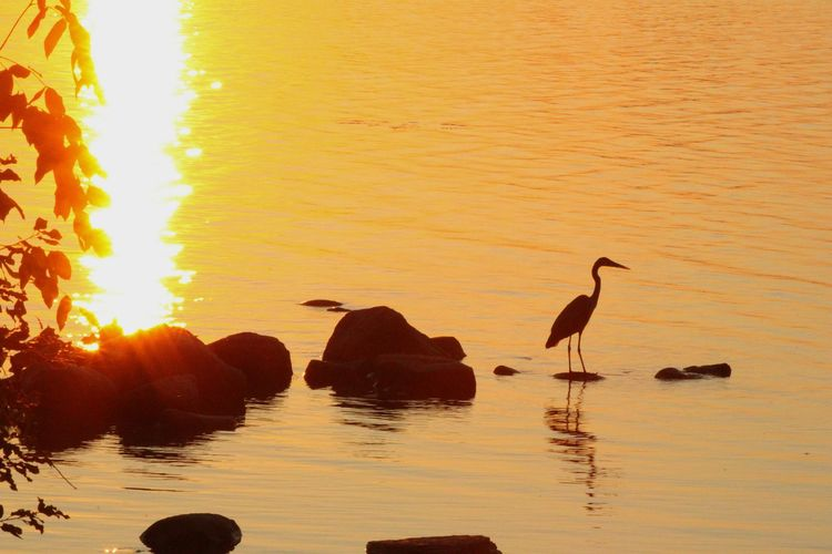 fishing Ottawa River The Great Outdoors - 2017 EyeEm Awards