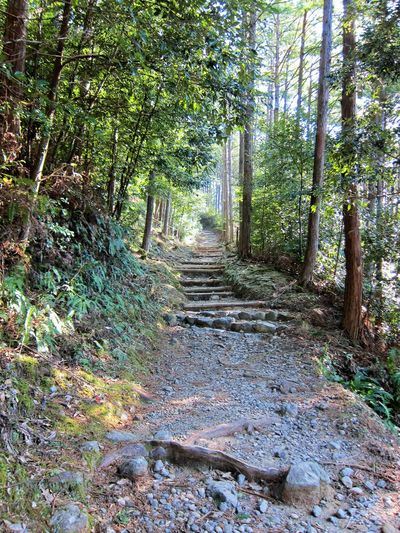 Kumano Kodo Pilgrimage Trails Hiking Japan Japanese Food Japanese Temple Journey Kumano Kumanokodo Nachiwaterfall Onsen Onsen Egg Pilgrimage Pilgrims Pogoda Shinto Shinto Temple Trail