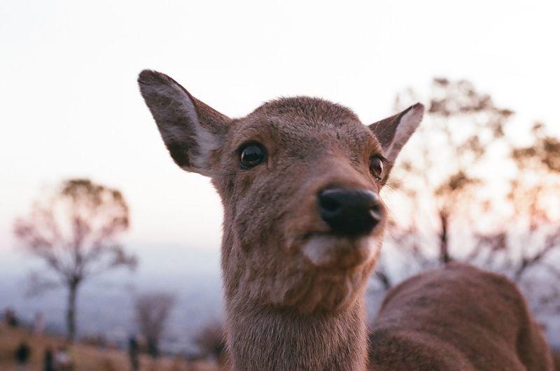 Nara,Japan Nara