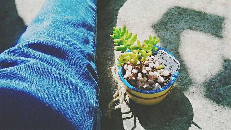 Always Be Cozy Having a sunny day with my cutie. Freshness One Person Real People Close-up Day Outdoors Adult People Little Plants🌿 On A Sunny Day Rooftop Sunlight Photography EyeEm Gallery Photograph Colour Of Life Color Portrait Fresh On Eyeem