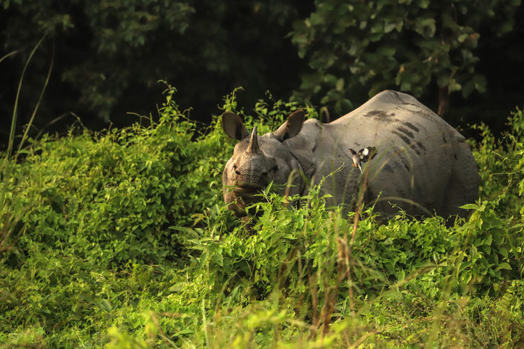 Chitwan National Park Nature Animal Wildlife Nature One Animal Outdoors Rhinoceros Rinoceronte Selva Wildlife