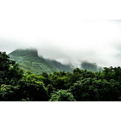 My soul is yearning for the mountains! Mountains Fog Foggy Greenary Nature Lover Waytoheaven Travel Explore Traveling Traveller Roadtrip Latepost 🗻 ☁ ⛅ 🌏 🎄