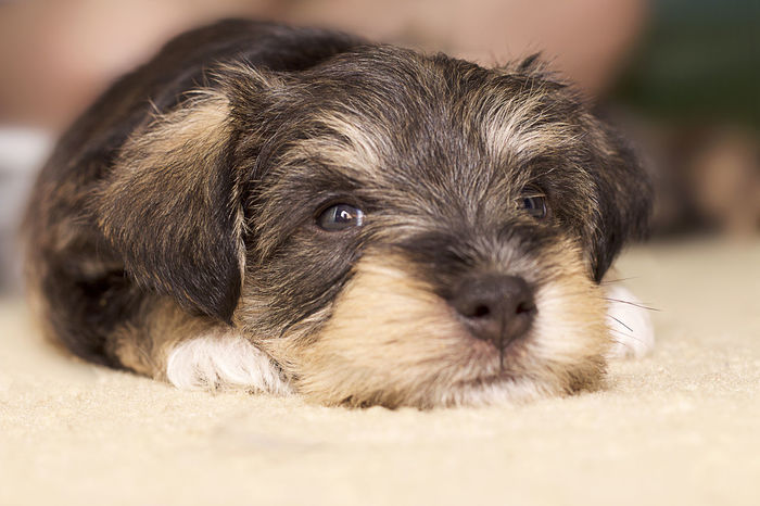 Close-up Dog Looking At Camera One Animal Pets Portrait Puppy Puppy Love Young Animal Tadaa Community