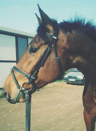 Horse Denis LoveLove ♥