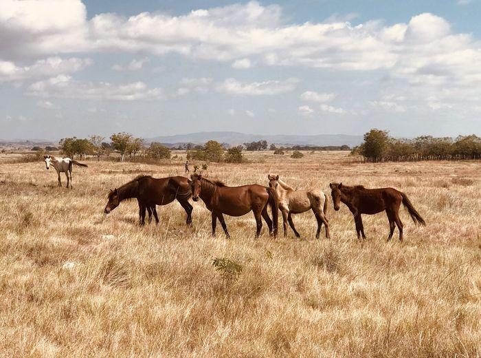 Horses on savana in earthy colour  tone